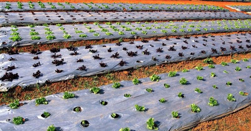 Удобрение сельского хозяйства